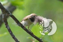 Заповедник «Присурский» приглашает отметить Международный день птиц
