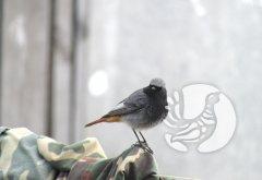 Заповедник «Присурский» подвел итоги дистанционной викторины «В мире птиц»